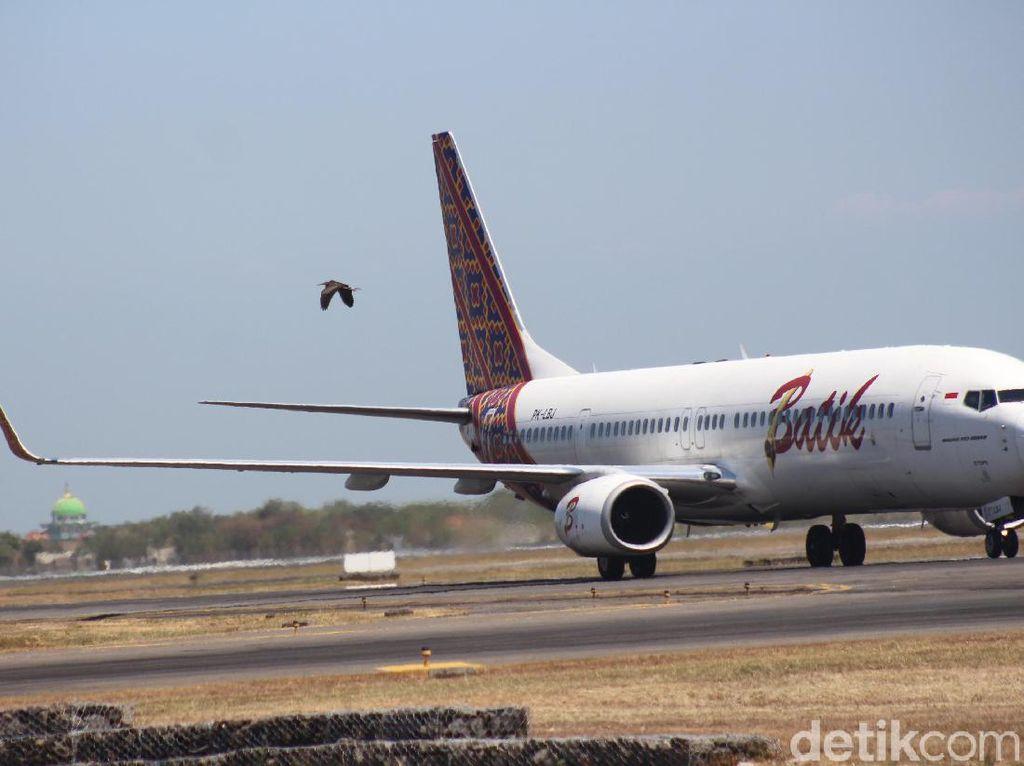 Ini yang Dilakukan Bandara Juanda Cegah Bird Strike