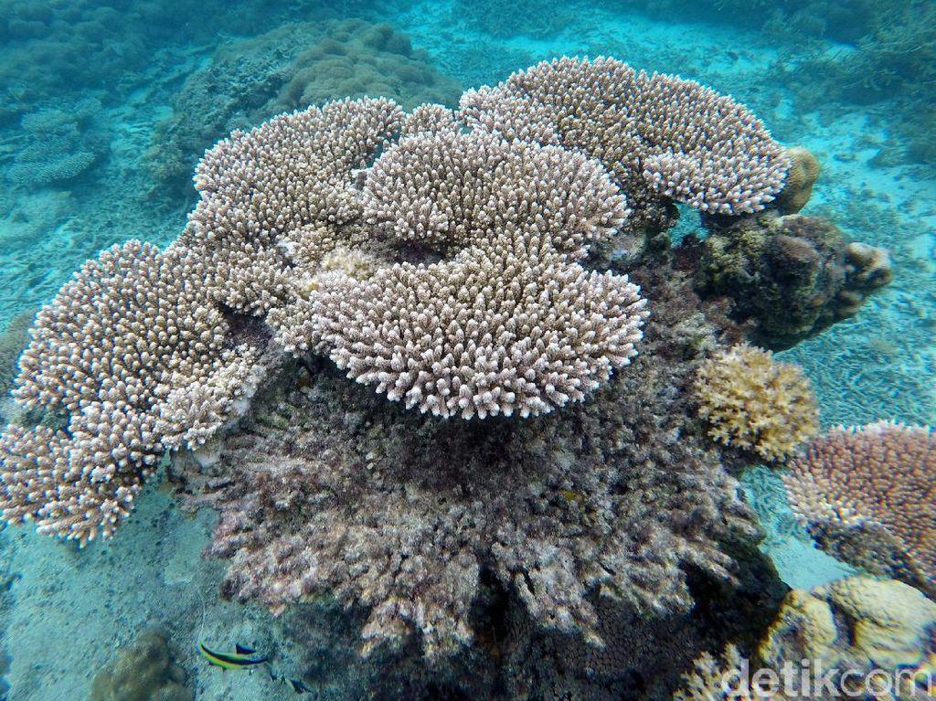 Pesona Keindahan Bawah Laut Pulau Senoa di Natuna