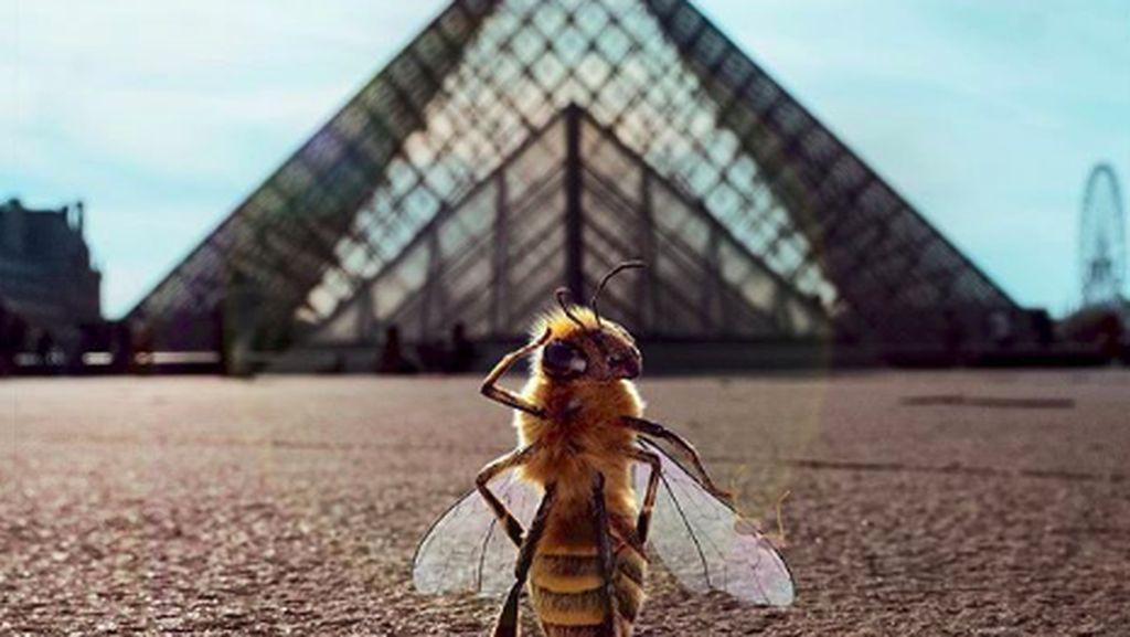 Foto: Cuma di Prancis, Ada Lebah Jadi Influencer Wisata