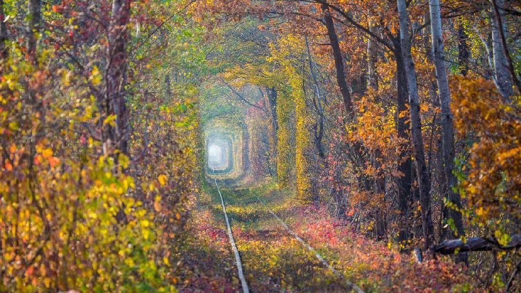 Terowongan Paling Romantis Dunia