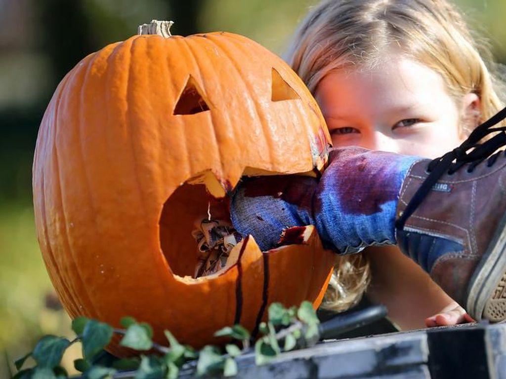 Trik Daur Ulang Sampah dan Labu Sisa Halloween