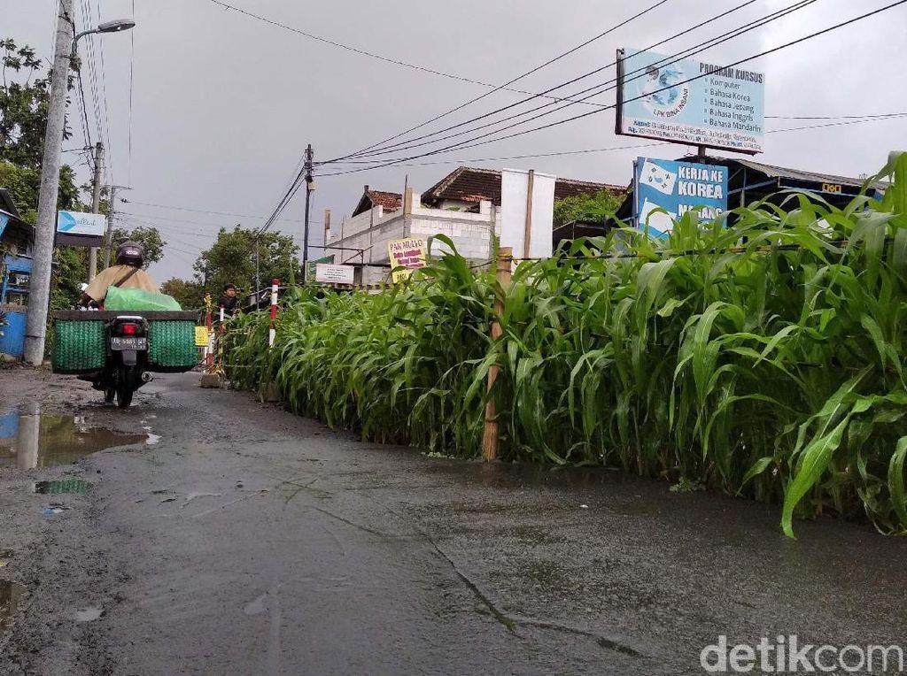Proyek Mangkrak hingga Jadi Kebun Jagung di Tengah Jalan, Pedagang Menjerit