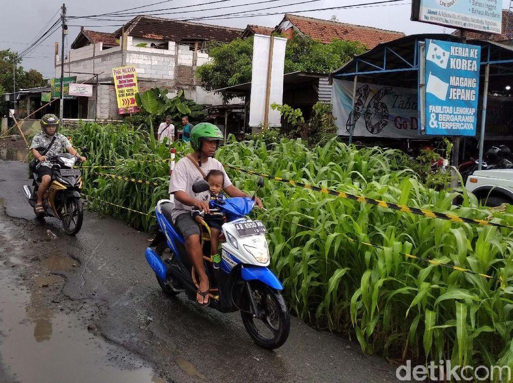 Kebun Jagung di Tengah Jalan Yogya, Buntut Suap Jaksa yang Dicokok KPK