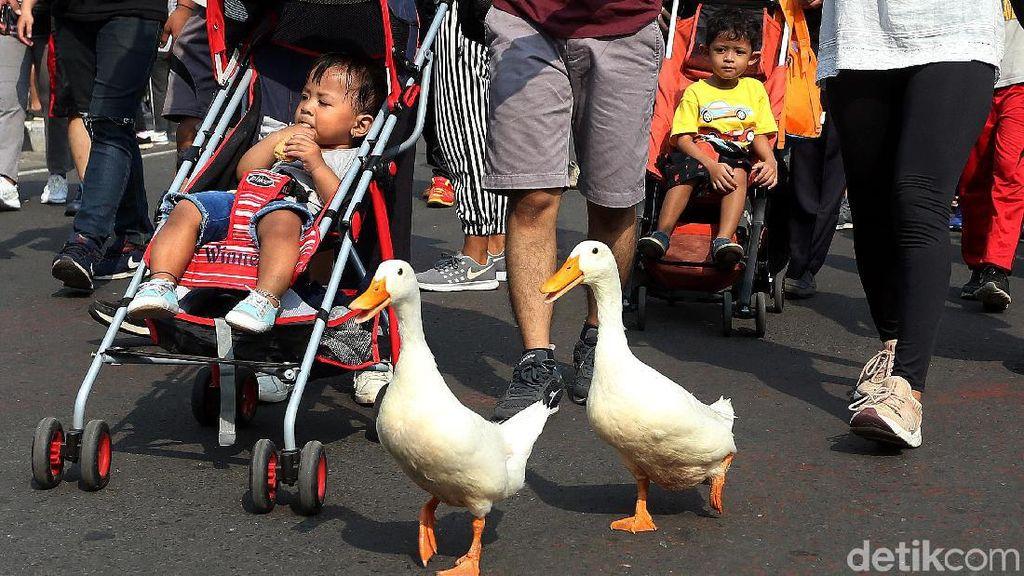 Saat Dua Bebek Ikut Ramaikan CFD di DKI