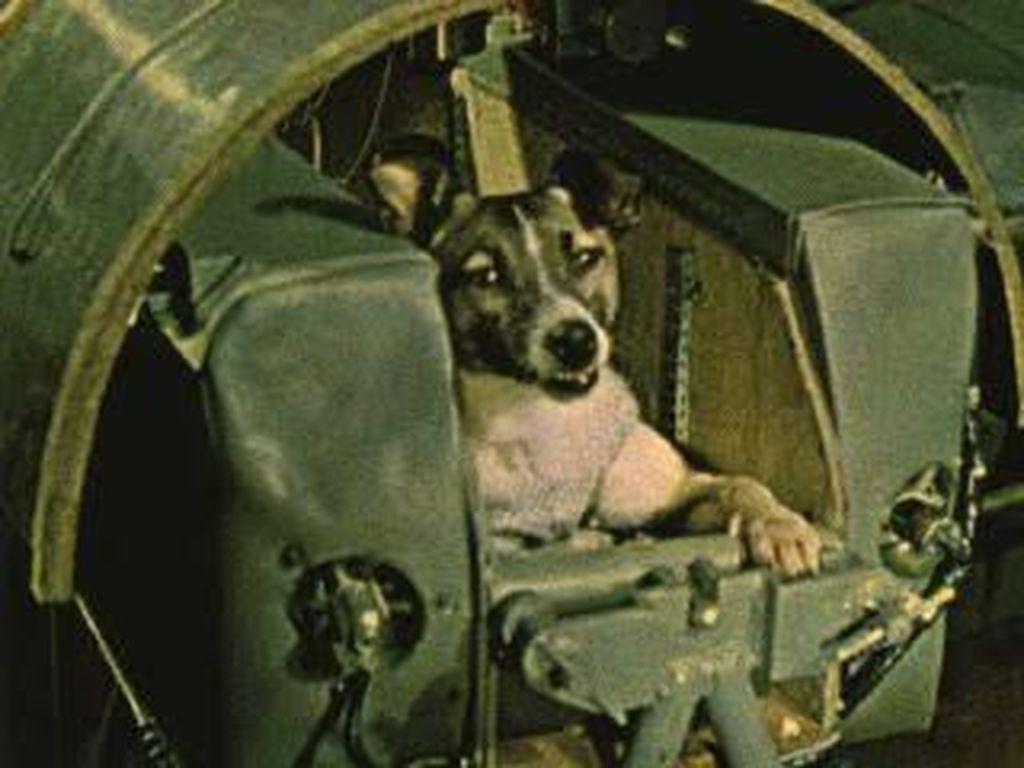 Mengenang Laika, Anjing Pertama yang ke Luar Angkasa
