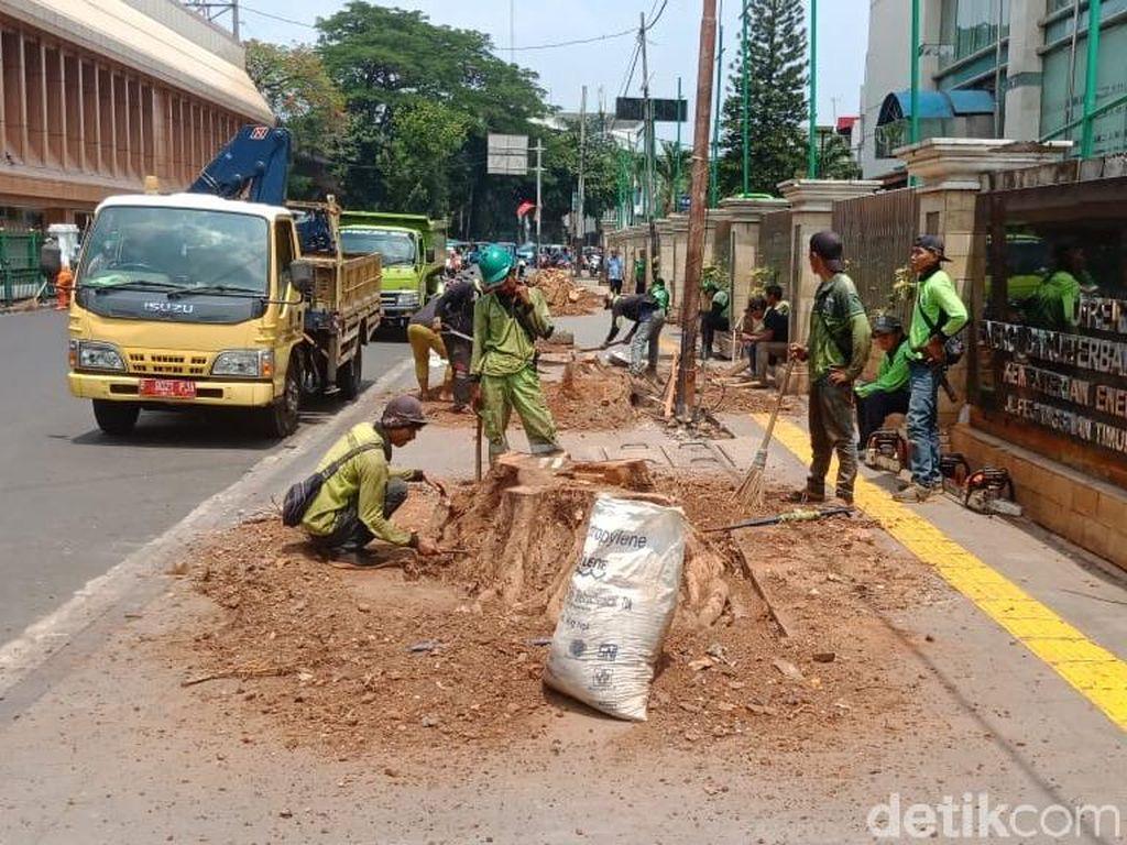 Penebangan Pohon di Cikini Dinilai Ganggu dan Bikin Panas Pejalan Kaki