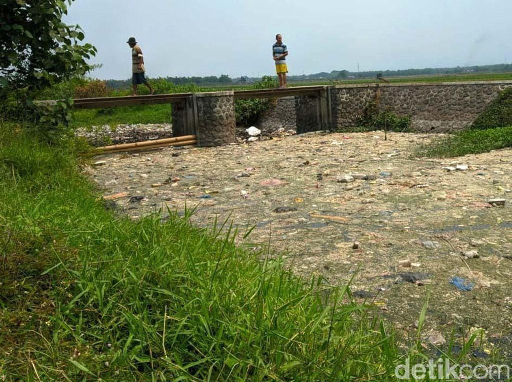 Jorok! Sungai Ledeng di Mojokerto Penuh Sampah dan Limbah Usus Ayam