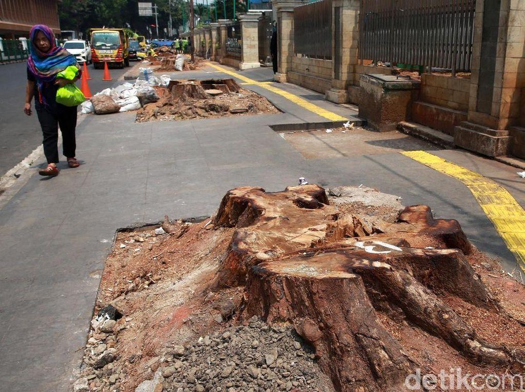 Sayangkan Pemotongan Pohon, PAN: Pemprov Tak Serius Bangun Jakarta