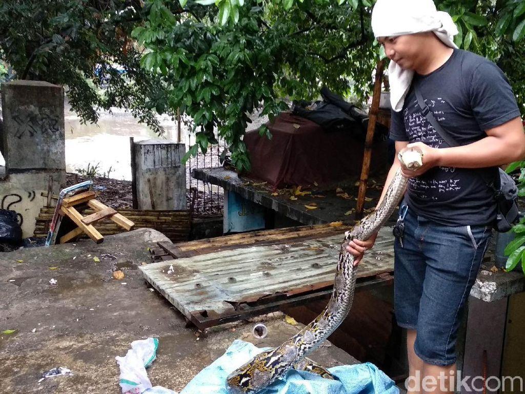 Warga Tangkap Ular Raksasa Saat Sungai Cikapundung Meluap