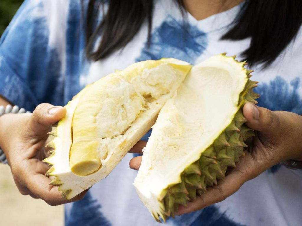 Besok, Bandara Soekarno Hatta Gelar Festival Durian