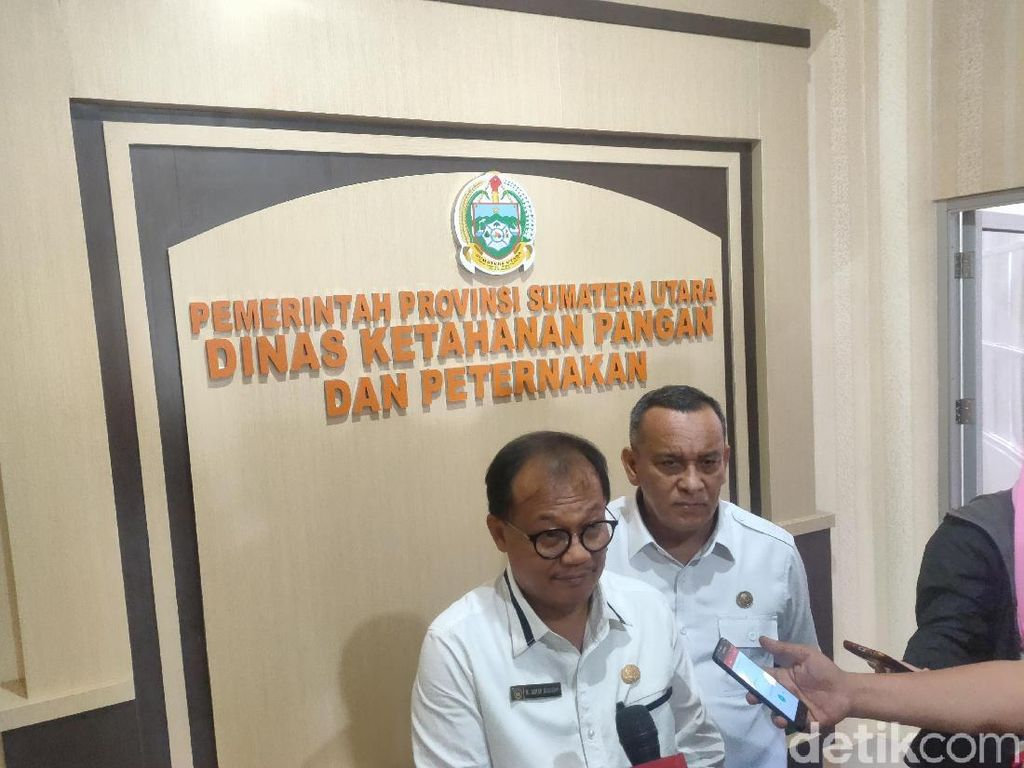 Ratusan Bangkai Babi di Sungai Medan, Pemkot Diminta Telusuri