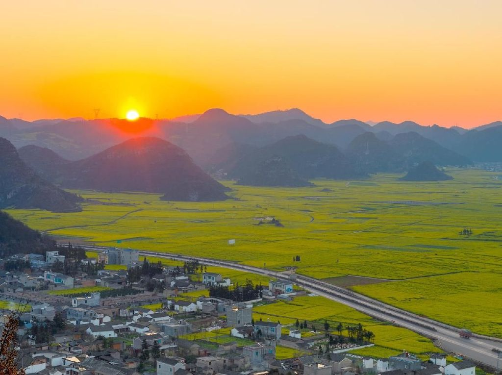 Foto Perkebunan Bunga Terbesar di Dunia yang... Kuning Banget!