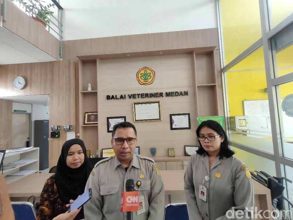 Balai Veteriner Temukan Indikasi Flu Babi di Kasus Kematian Babi di Medan