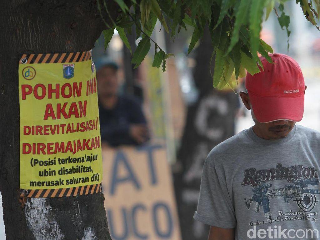 Usai Cikini, Tebang Pohon Akan Lanjut di Kramat Jakpus demi Trotoar