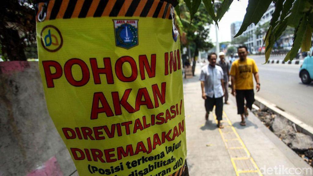 Pohon-pohon di Trotoar Kramat Bakal Senasib dengan yang di Cikini