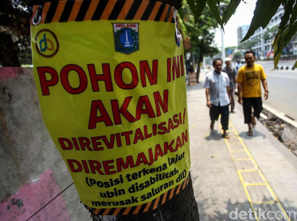 Dinas Kehutanan Cek Kesehatan 250 Pohon di Jakarta