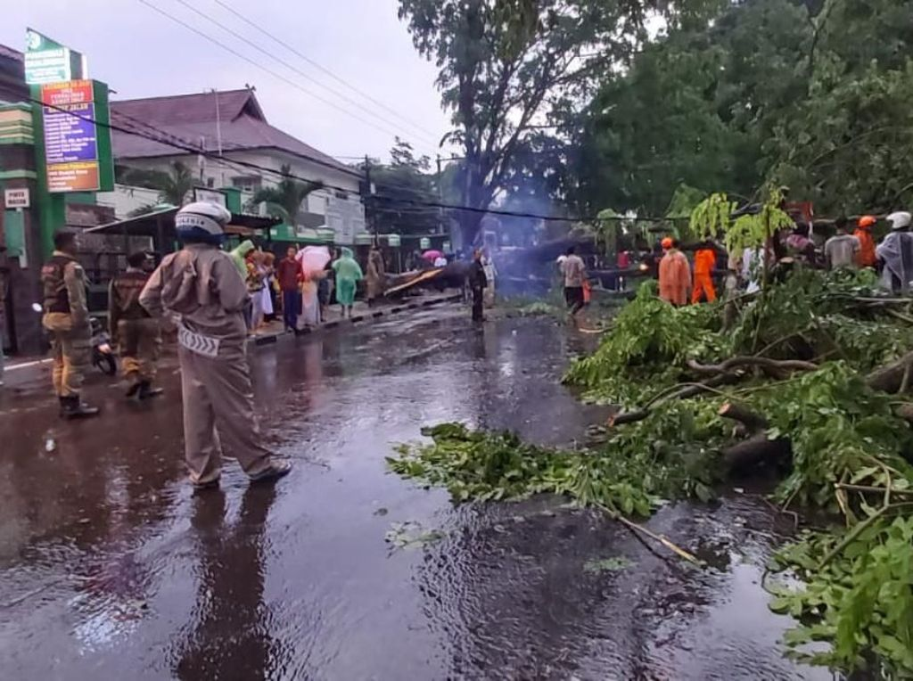 Pohon Tumbang di Cicalengka Bandung, Arus Lalu Lintas Dialihkan