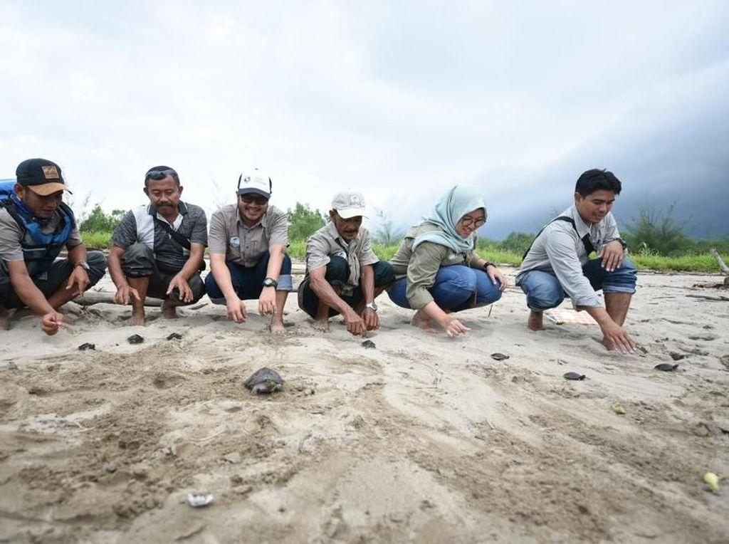 Pelestarian Tuntong Laut Bangkitkan Pariwisata Aceh Tamiang