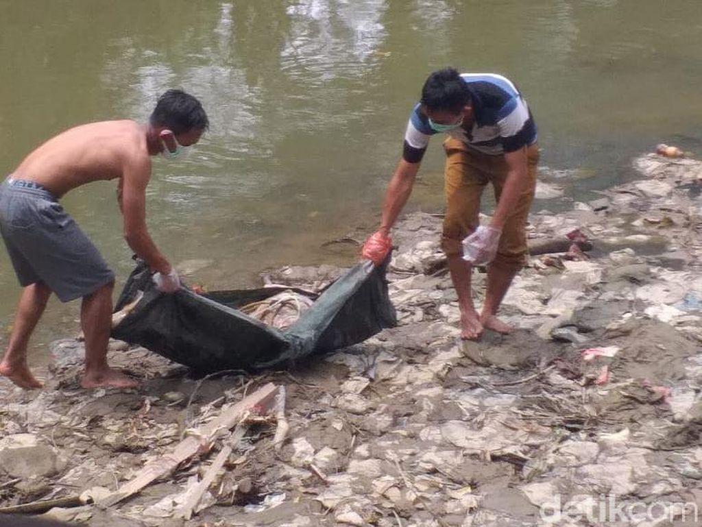 Pemkot Medan Bersihkan Bangkai Babi di Sungai Deli