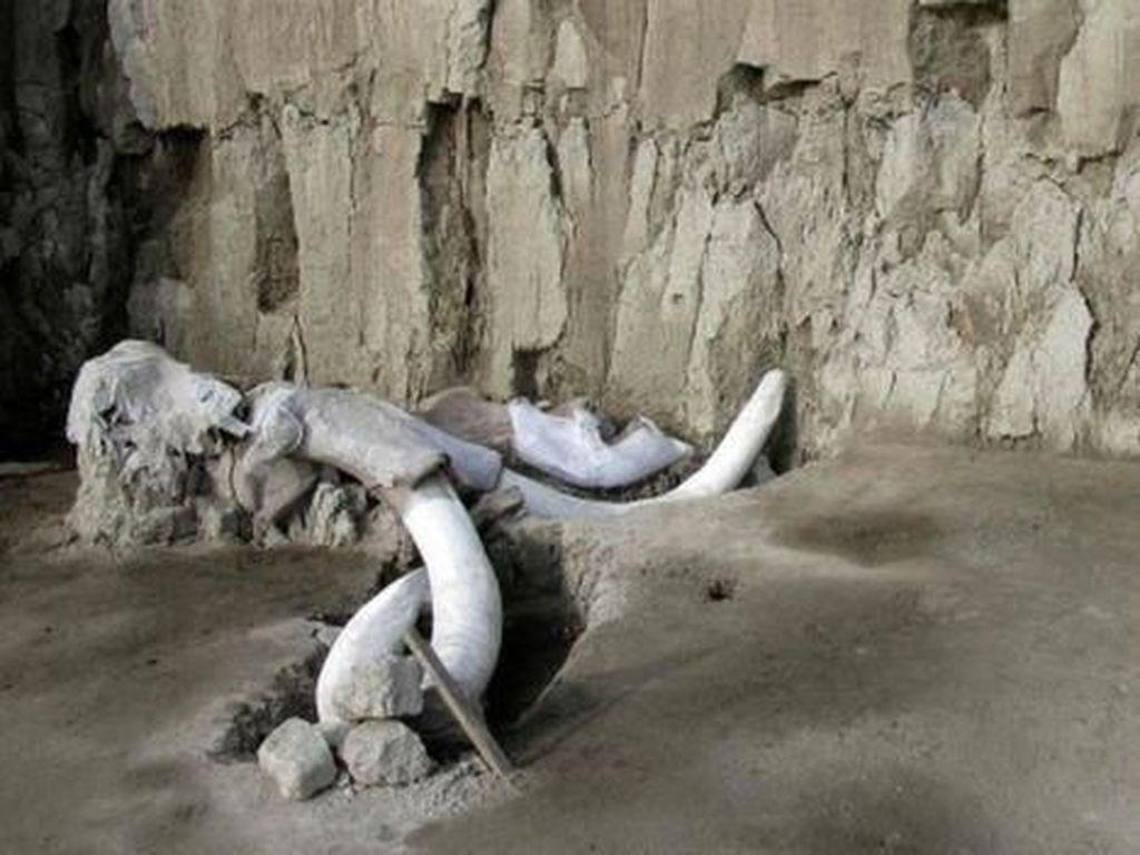 Ilmuwan Temukan Perangkap Mammoth Berusia 15 Ribu Tahun