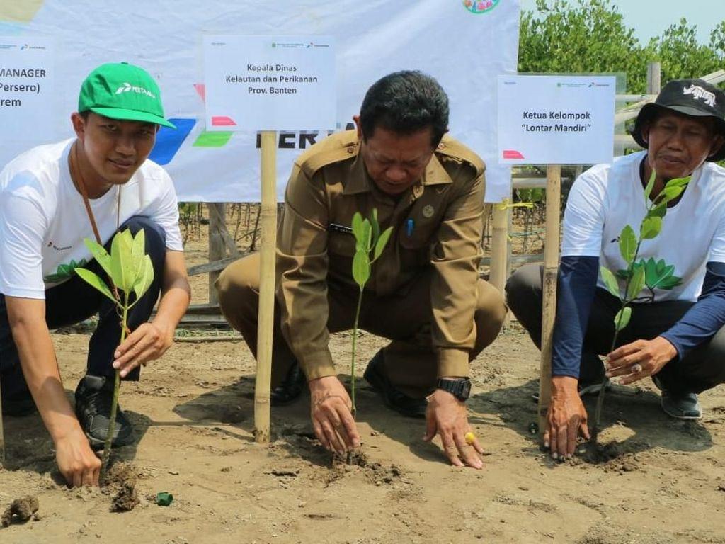 Pertamina Ajak Generasi Muda Tanam Mangrove di Pantai Banten