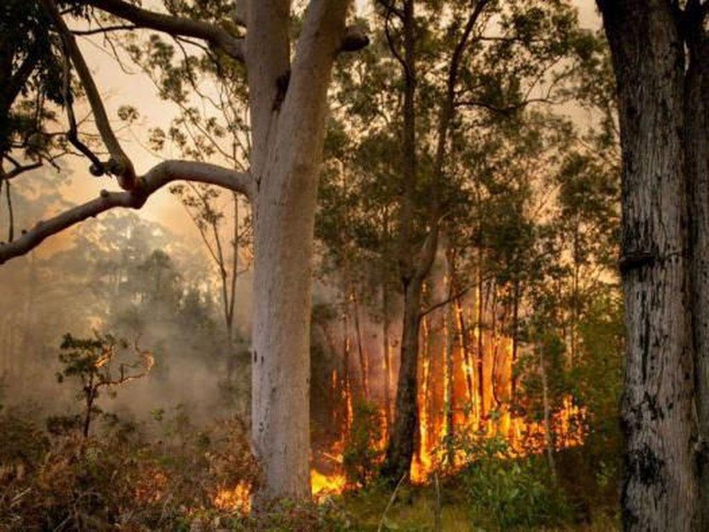 Kebakaran Hutan Besar Hanguskan 1 Juta Hektar Lahan di New South Wales