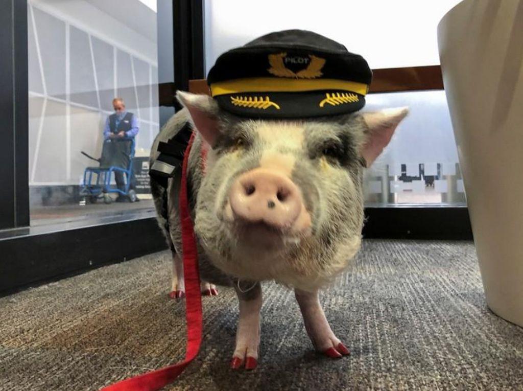 Potret LiLou, Babi Petugas Bandara