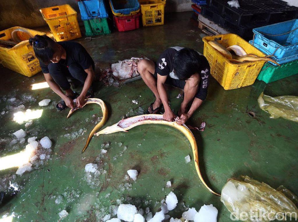 Produksi Ikan di Perbatasan Ini Tembus Pasar Singapura