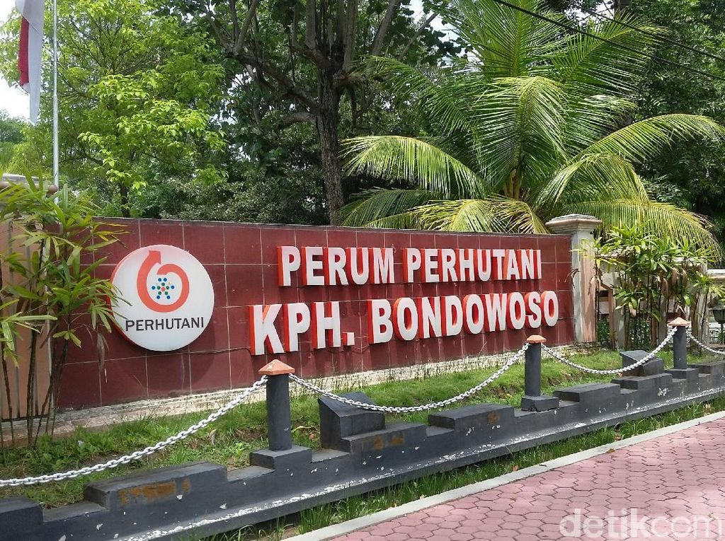 50,9 Hektare Hutan di Bondowoso Hangus Dampak Kebakaran Ijen