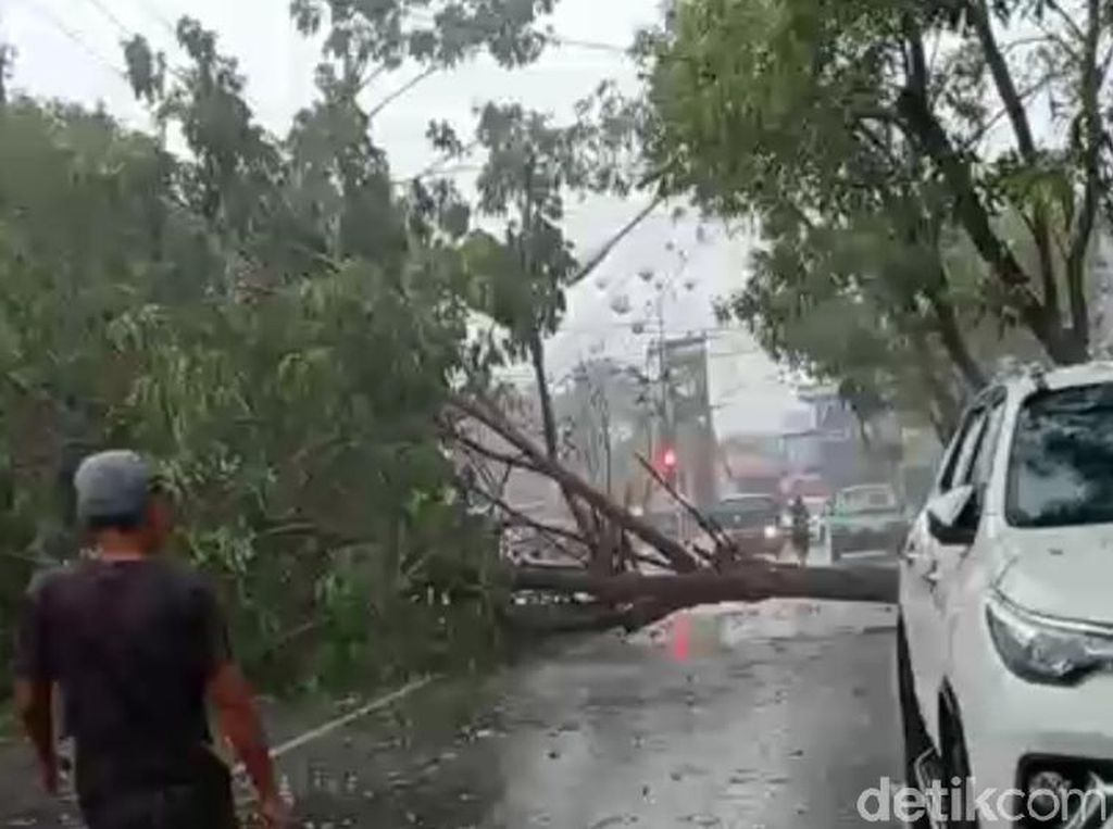 Hujan Disertai Angin, 8 Titik Pohon Tumbang dan Lampu PJU Roboh