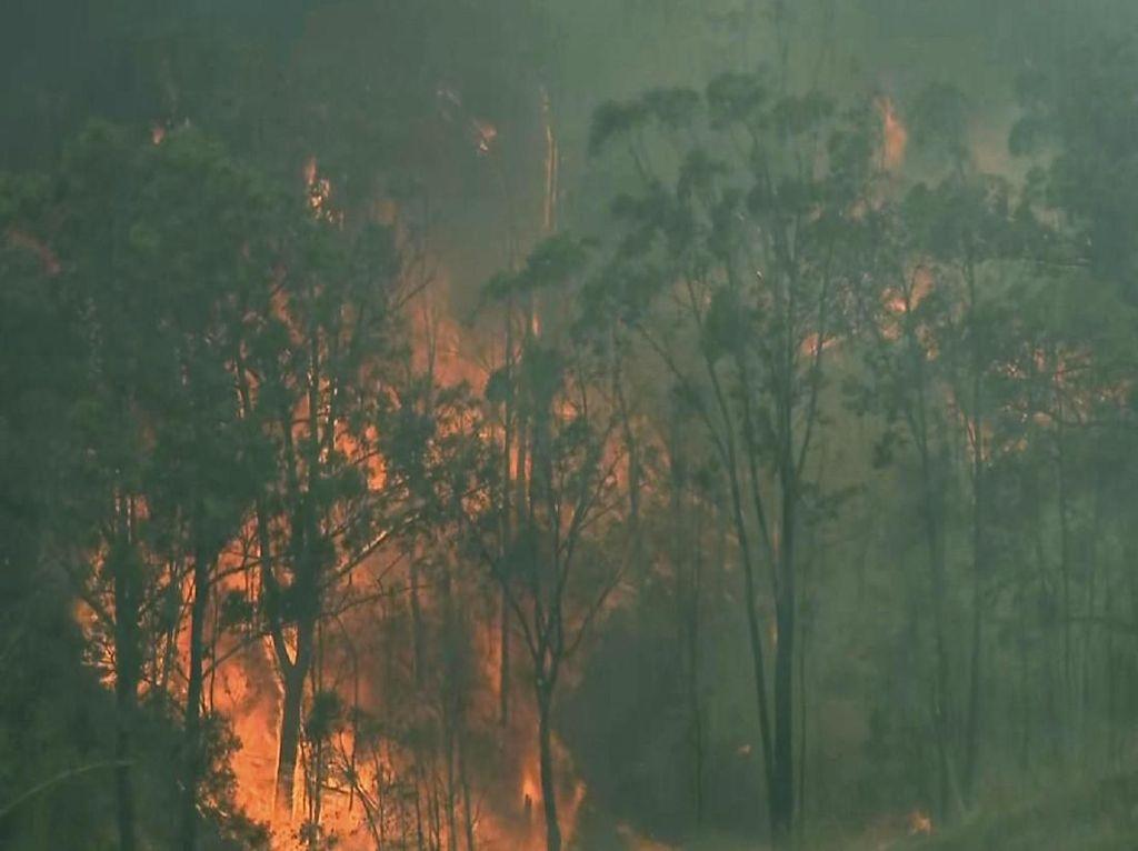 Petani Ganja Diduga Penyebab Kebakaran Hutan di Australia