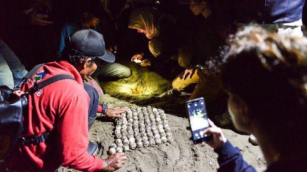 Ekowisata Bersama Penyu Belimbing di TN Meru Betiri