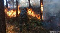 Kebakaran Hutan di Gunung Lawu Rusak Ribuan Penampung Getah Pinus