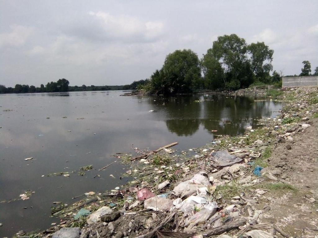 Bangkai Babi Sudah Diangkut, Danau Siombak Medan Masih Keluarkan Bau