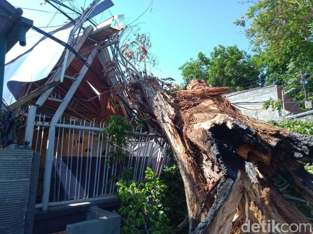 Tak Ada Angin dan Hujan, Pohon Sono Tumbang Timpa Rumah
