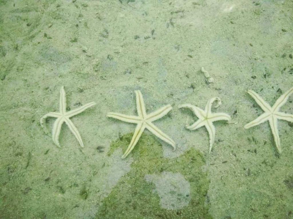 Bermain dengan Bintang Laut di Pulau Pari