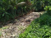 Sampah di Kalibaru Bogor Tak Kunjung Dibersihkan, Warga Khawatir Banjir
