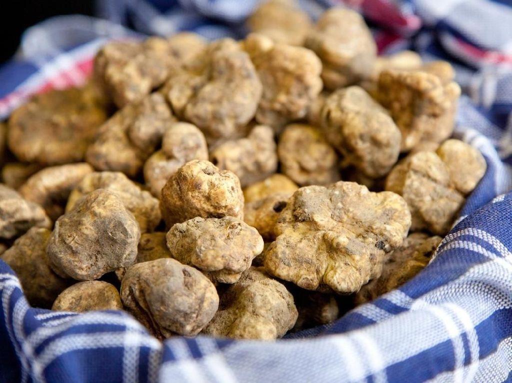 Pemanasan Global Sebabkan Jamur Truffle Putih Layu dan Kering