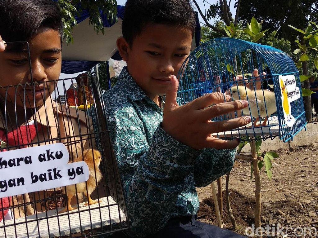 Diklaim Berhasil, Program Chickenisasi Ditambah 10 Ribu Ekor Tahun Depan