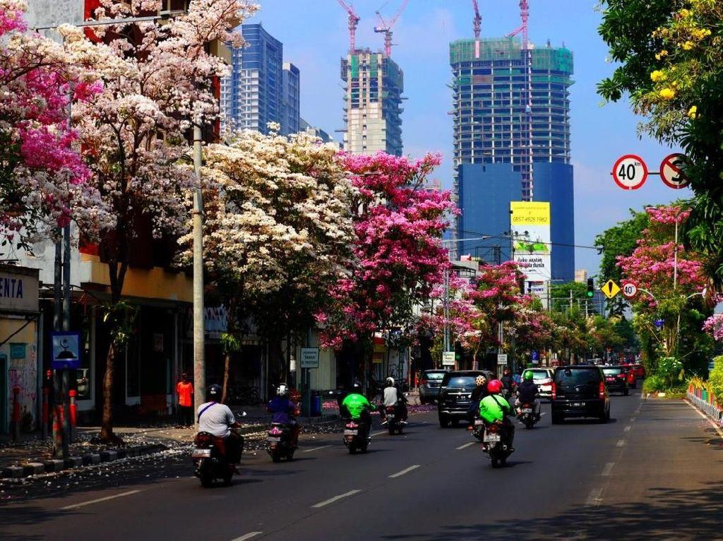 Tak Hanya Rajin Tanam Tabebuya, Pemkot Surabaya Juga Punya Pembibitannya