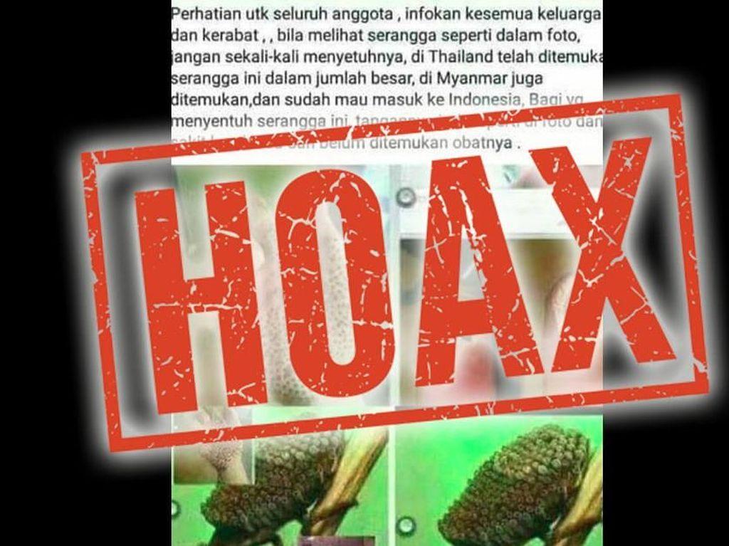 Hoax Serangga Misterius Bikin Tangan Bolong, Nggak Kuat Jangan Lihat!