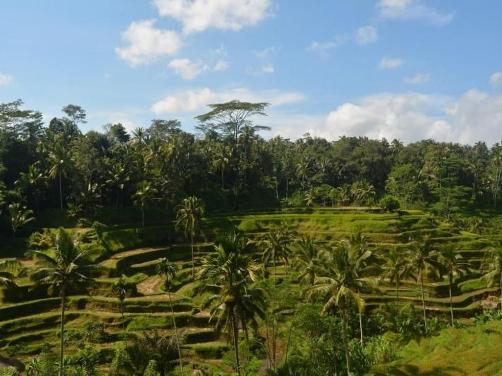 Banjar Nagi di Ubud Masuk Daftar Lingkungan Terkeren Dunia