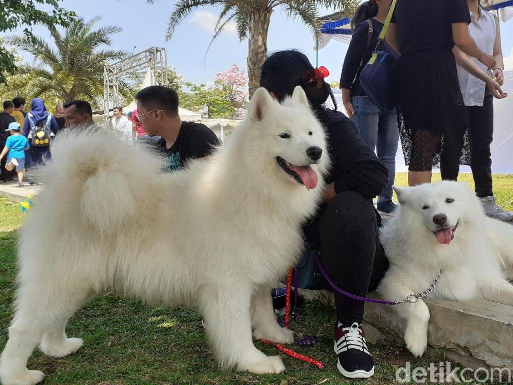 MUI Dukung Gerakan Bebas Daging Anjing di Malang