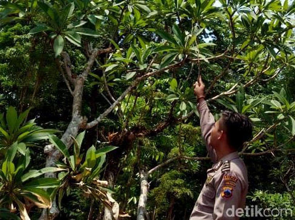 Penampakan Lokasi Sarang Tawon Vespa yang Bunuh Pasutri di Pemalang