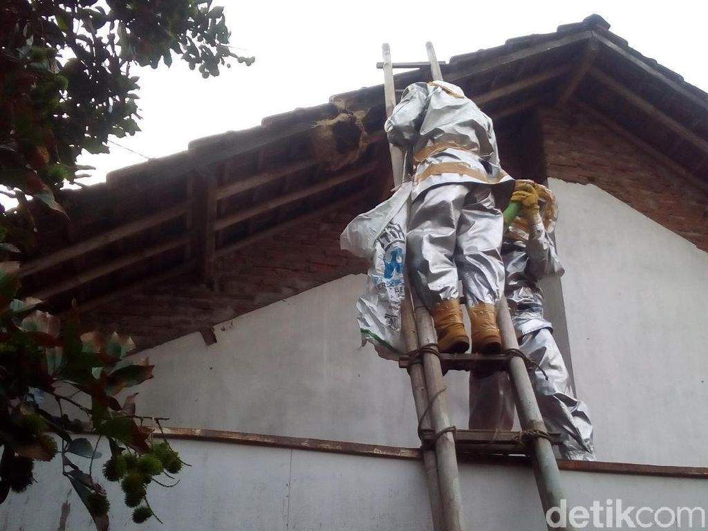 50 Sarang Tawon Vespa di Bekasi Dievakuasi, Belasan Orang Tersengat
