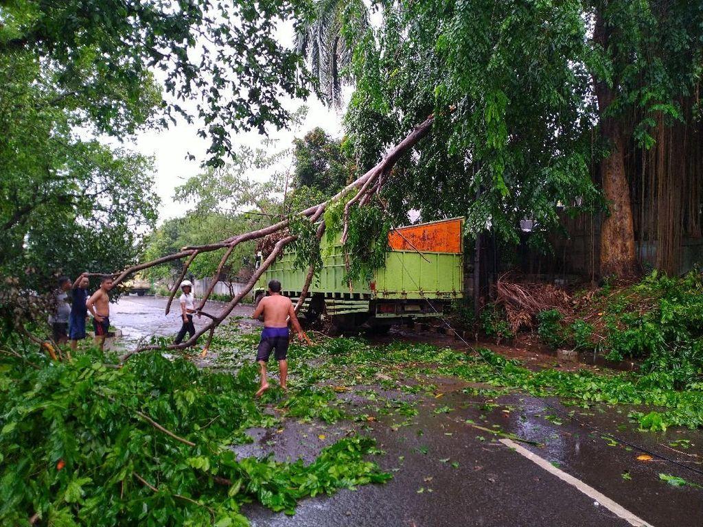 Diterpa Hujan-Angin Kencang, Pohon di Bogor Tumbang Hingga Timpa Truk