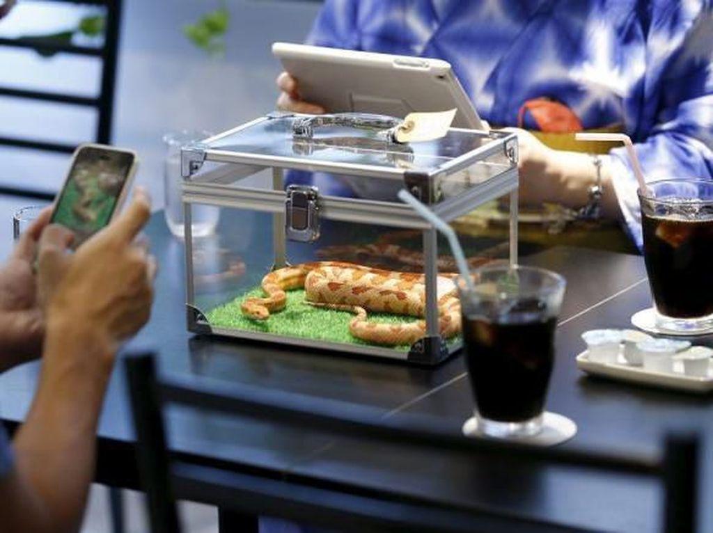 Ular Hingga Singa, Ini 5 Restoran yang Tawarkan Sensasi Makan dengan Hewan Buas
