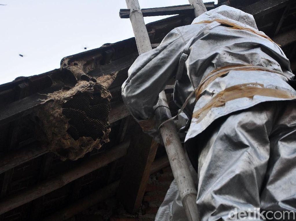 Petugas Damkar Turun Tangan Musnahkan Sarang Tawon Vespa