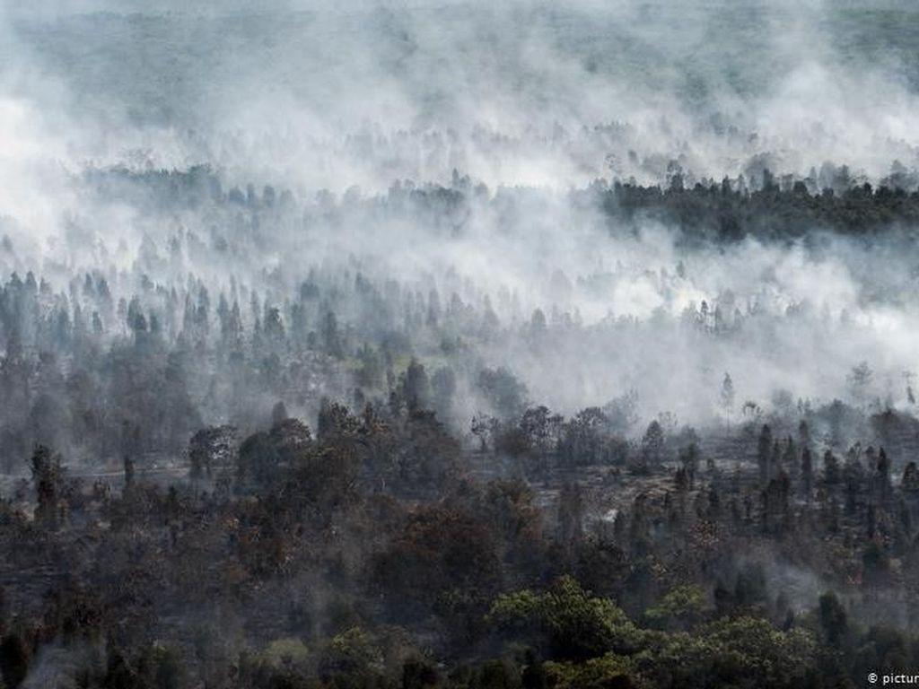 Sedih, Setiap 6 Detik Hutan Seluas Lapangan Bola Hilang di Amazon