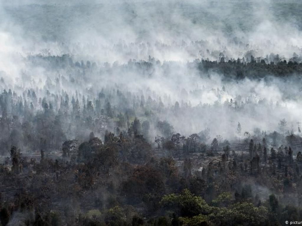 CIFOR Tarik Pernyataan Soal Kebakaran Lahan Indonesia 2015 dan 2019